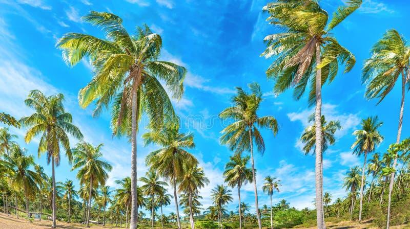 Ландшафт зеленого тропического леса стоковые фото