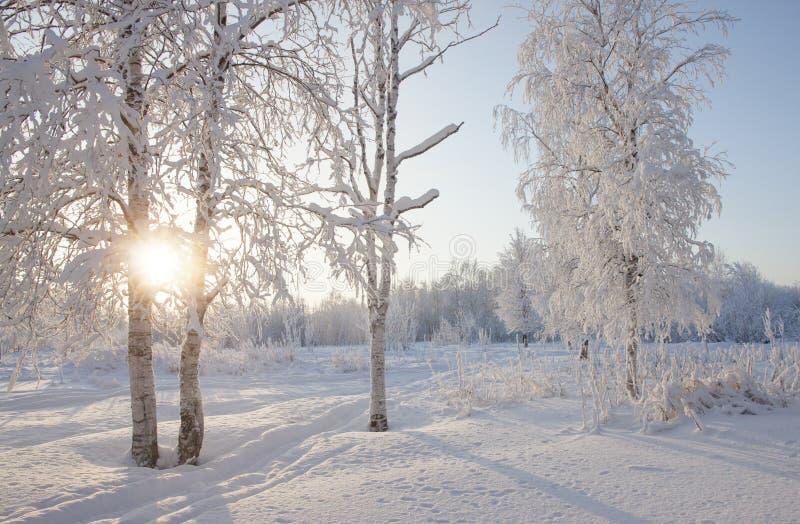 Ландшафт зимы в лесе с лучами солнца стоковые изображения rf