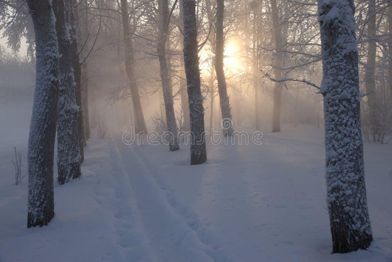 Ландшафт зимы в лесе стоковая фотография rf