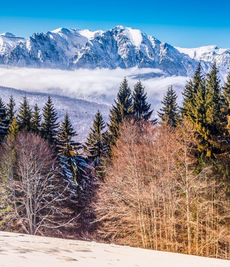 Ландшафт зимы в Румынии с прикарпатскими горами стоковые фотографии rf