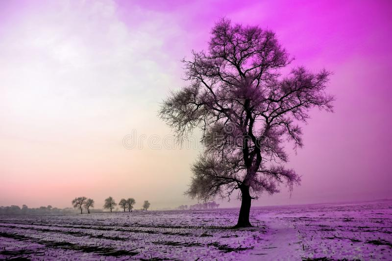Ландшафт зимы в утре, снеге и дереве с ультрафиолетов тоном стоковая фотография