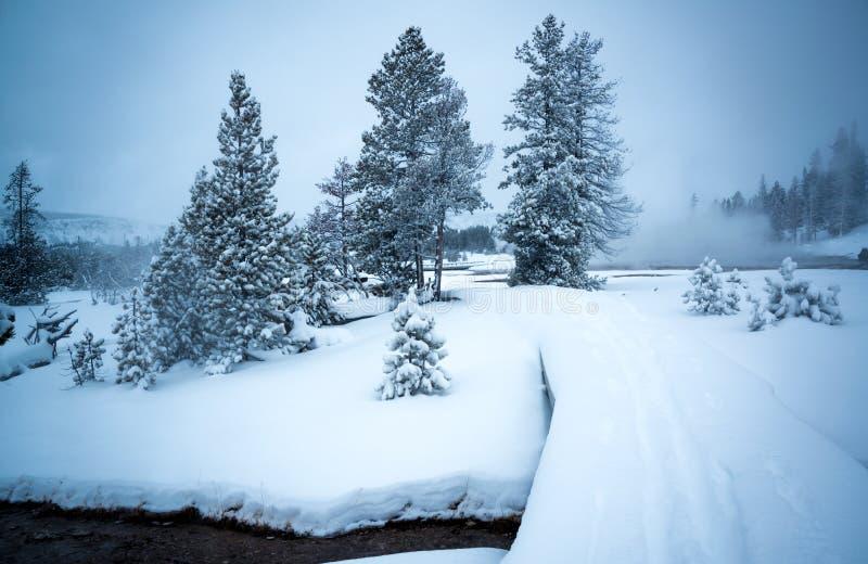Ландшафт зимы, Йеллоустон стоковая фотография