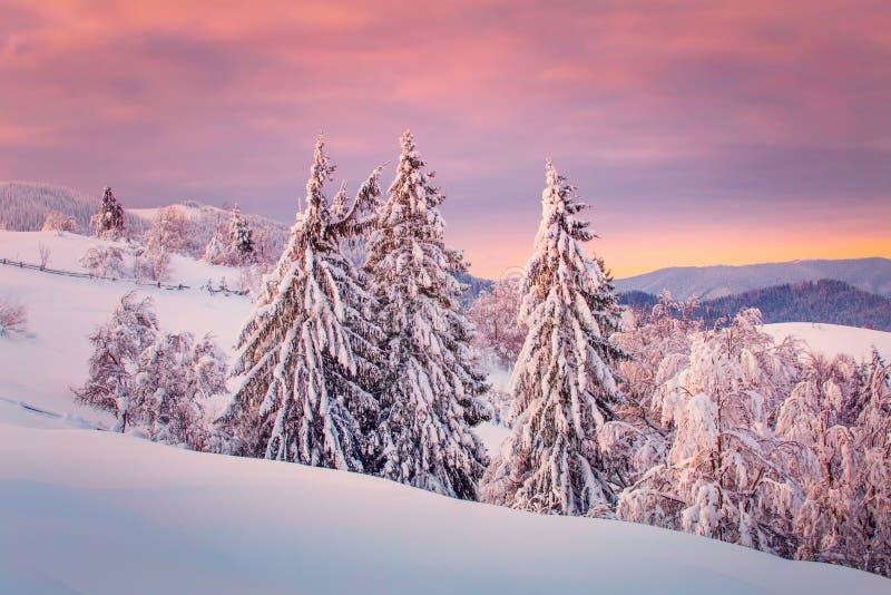 Ландшафт зимы на восходе солнца стоковое фото