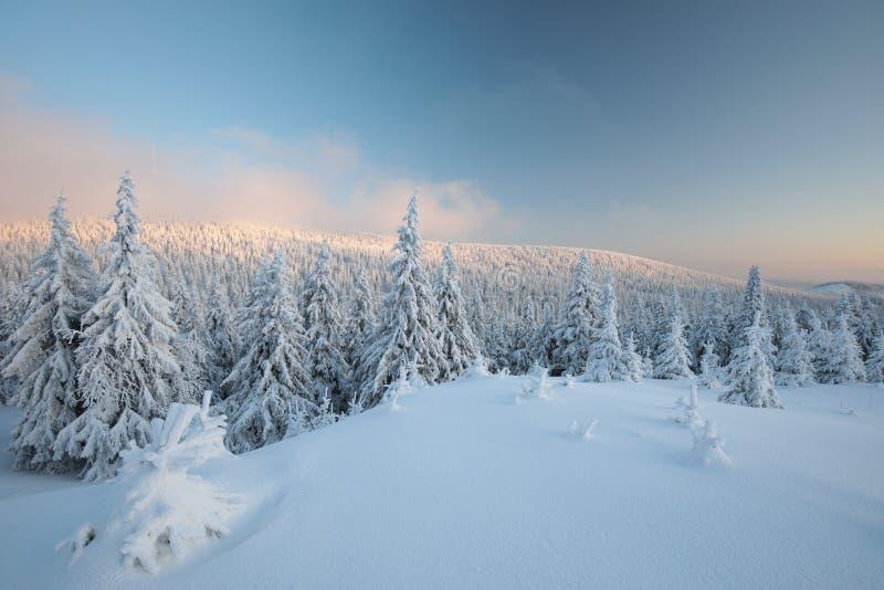 Ландшафт зимы на восходе солнца стоковое фото rf
