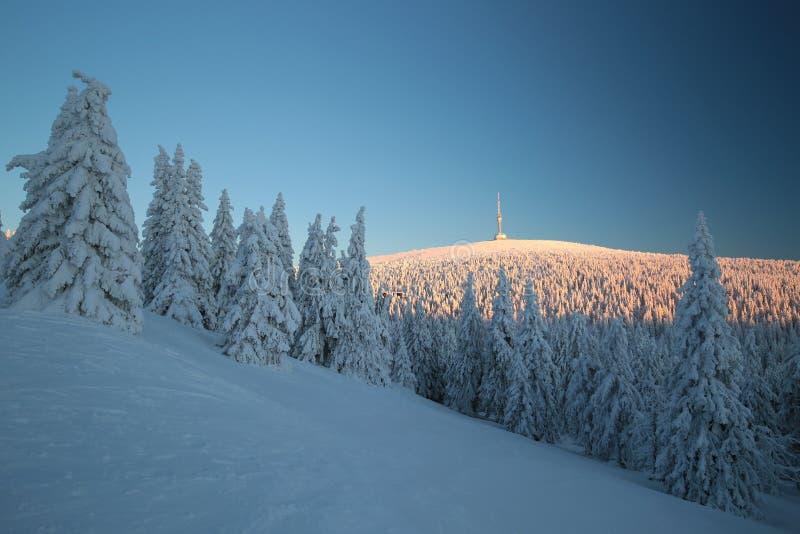 Ландшафт зимы на восходе солнца стоковые фотографии rf