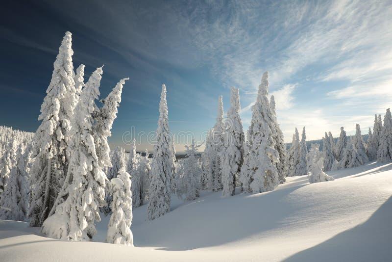 Ландшафт зимы на зоре стоковые изображения rf