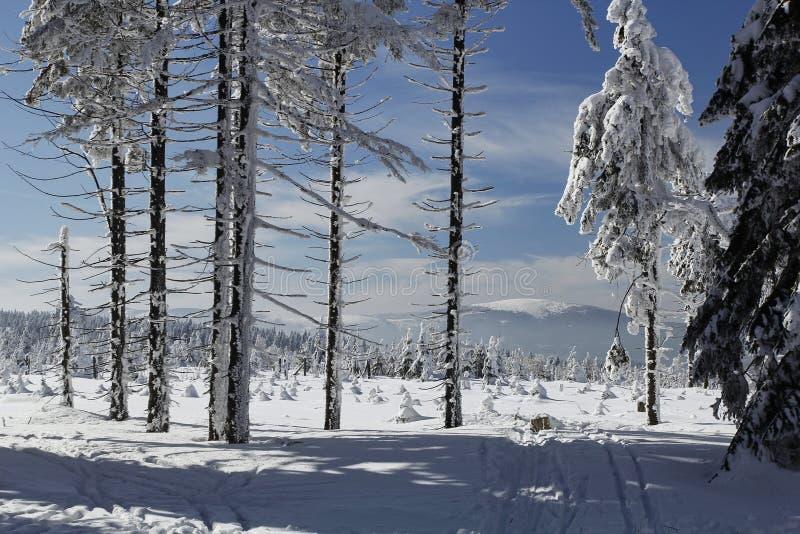 Ландшафт зимы под Kralicky Sneznik стоковая фотография