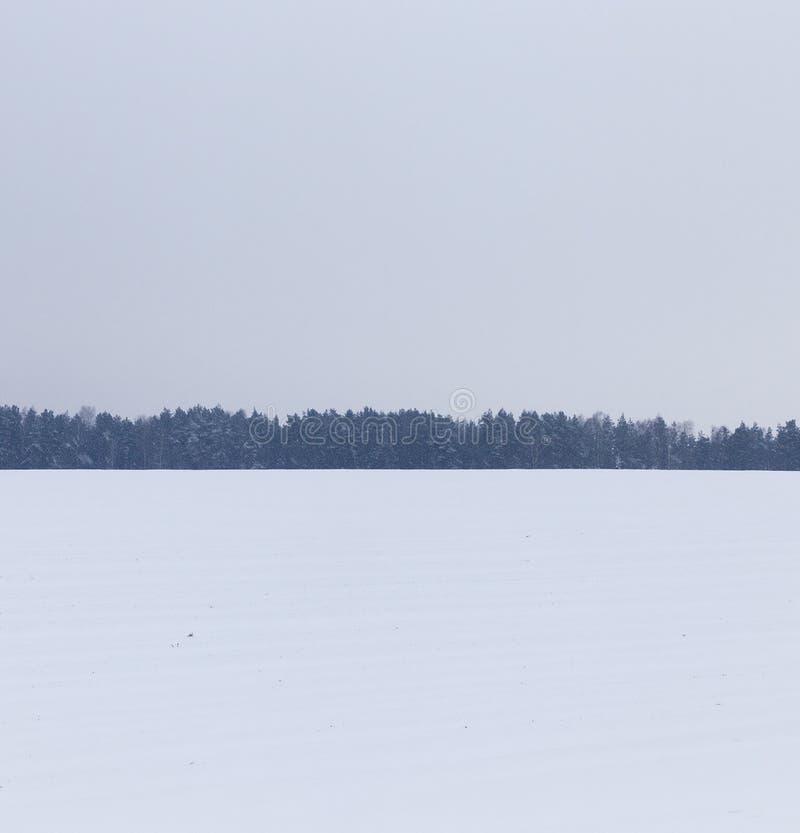 Ландшафт зимы, снежности стоковое изображение