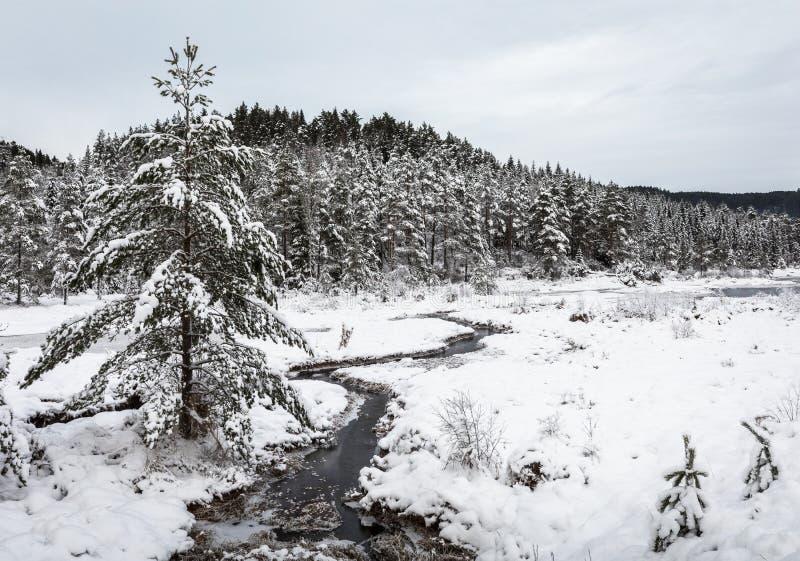 Ландшафт зимы, сосны предусматриванные в снеге рядом с заводью, южной части Норвегии стоковая фотография