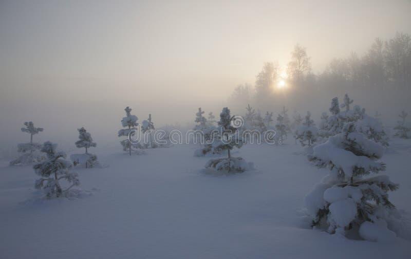 Ландшафт зимы с небольшими деревьями, туманом и солнцем в помохе стоковые изображения