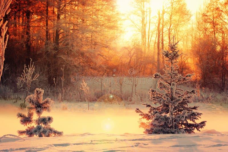 Ландшафт зимы с небольшими сосной и спрусом стоковые изображения rf