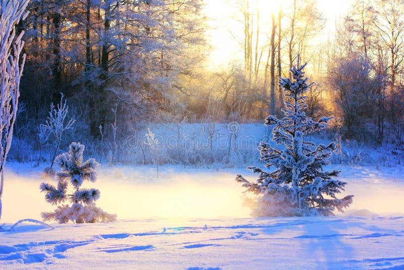 Ландшафт зимы с небольшими сосной и спрусом стоковая фотография rf
