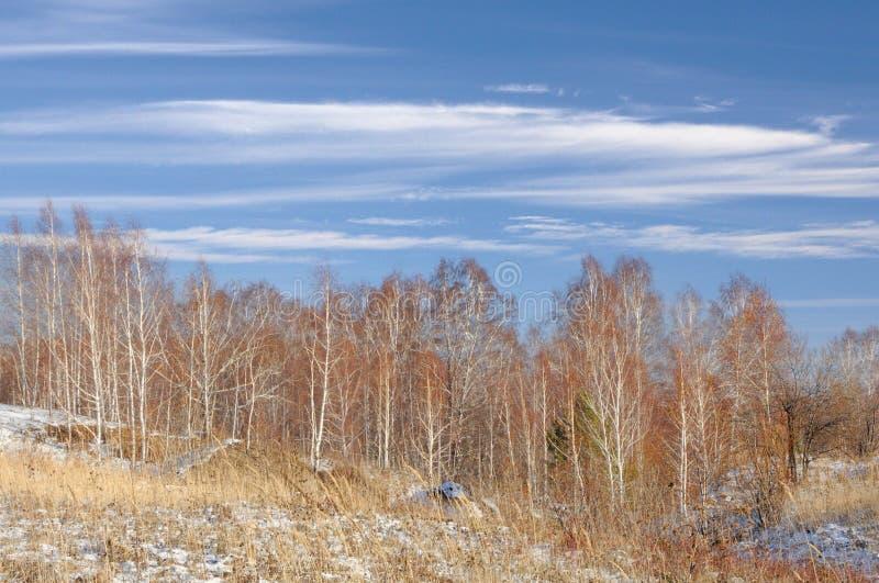 Ландшафт зимы с обнаженными деревьями и сухой желтой травой покрытыми с первым снегом под голубым небом с облаками пера стоковые изображения rf