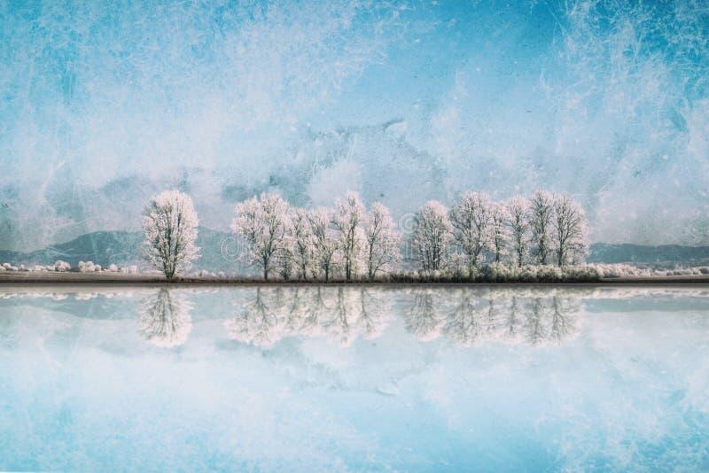 Ландшафт зимы с переулком снежных деревьев стоковые изображения