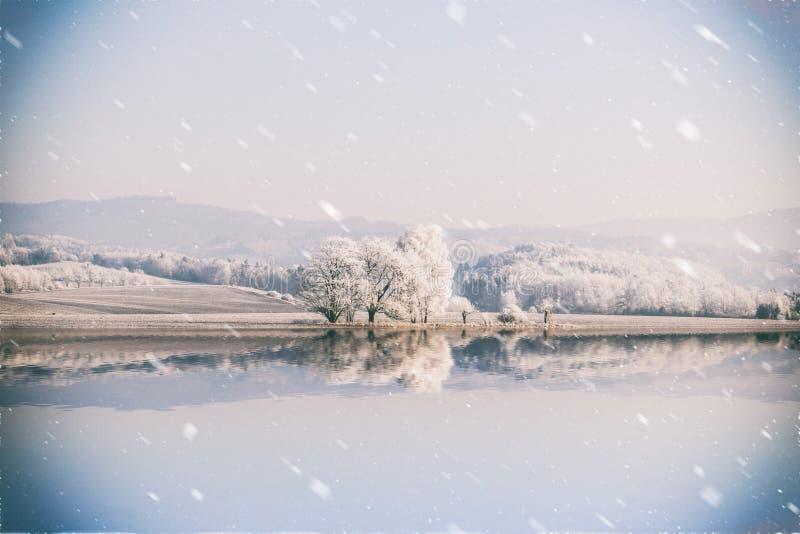 Ландшафт зимы с переулком снежных деревьев стоковые фото