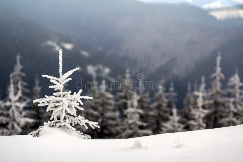 Ландшафт зимы с снегом покрыл малую сосну стоковые изображения