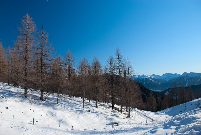 Ландшафт зимы стоковое изображение rf
