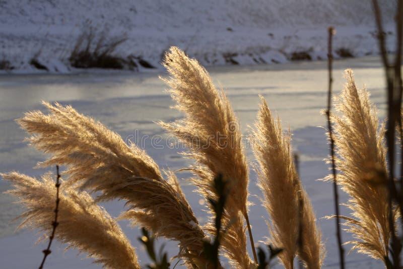 Download Ландшафт зимы стоковое фото. изображение насчитывающей снежок - 18386676