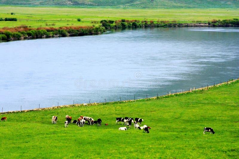 Ландшафт злаковиков Hulunbuir стоковые изображения