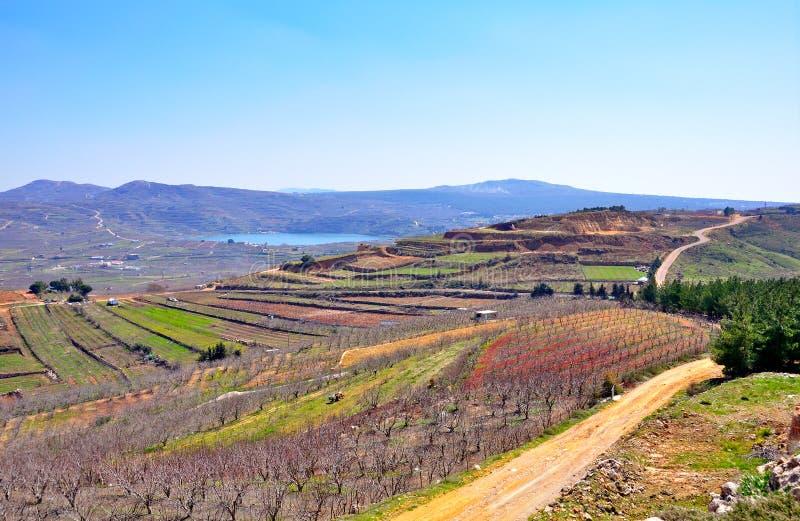 ландшафт Израиля стоковое изображение rf
