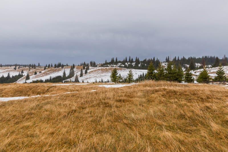 Download Ландшафт и сосны горы стоковое изображение. изображение насчитывающей земля - 105037599