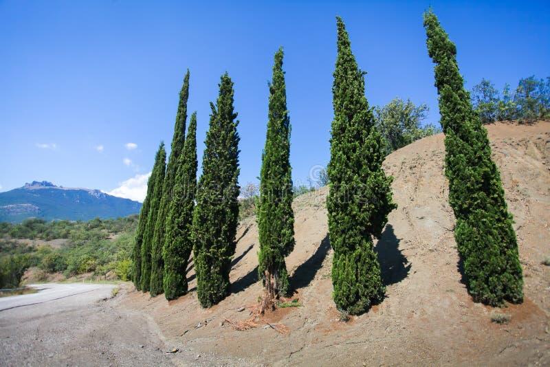 Ландшафт кипарисов гребет вдоль проселочной дороги в сельской местности Crimia стоковая фотография
