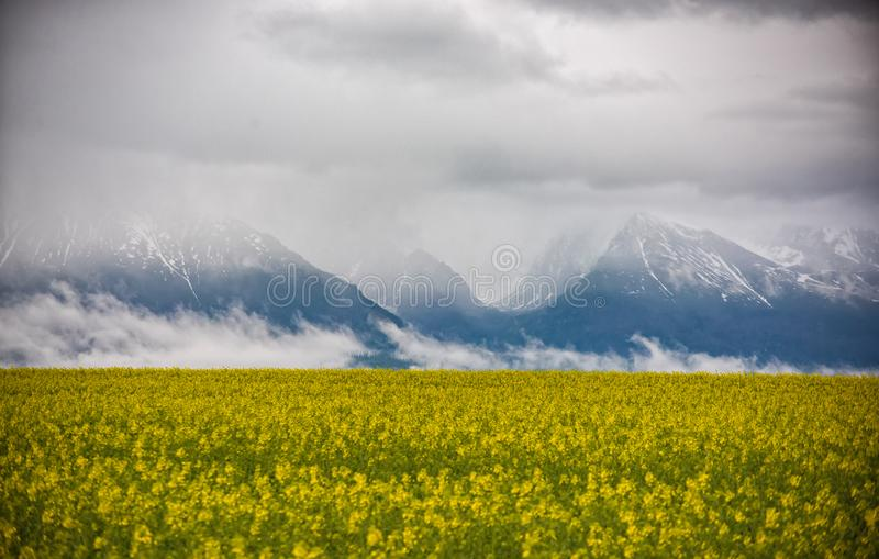 Ландшафт красивой весны естественный с желтым полем рапса и драматическими облаками покрывая горы на заднем плане стоковое изображение rf