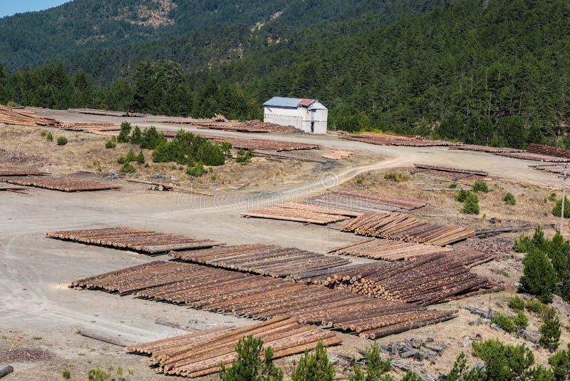 Ландшафт леса деревянных журналов древесин сосны в лесе, штабелированных в куче в национальном парке Pindus стоковое изображение