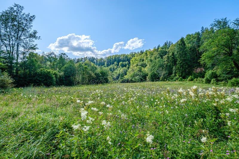 ландшафт леса и луга в небе лета голубом выше стоковое фото