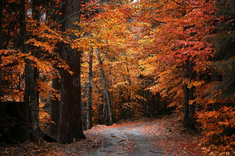 Ландшафт леса осени стоковое фото