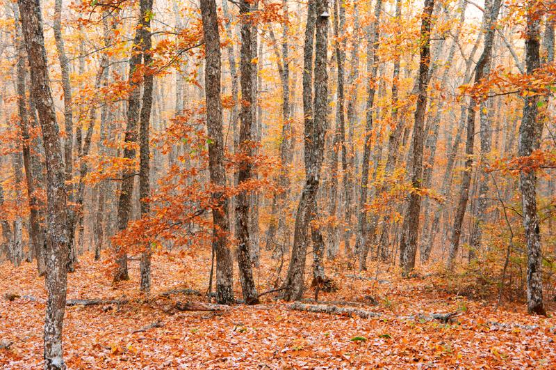 Ландшафт леса осени стоковые изображения rf