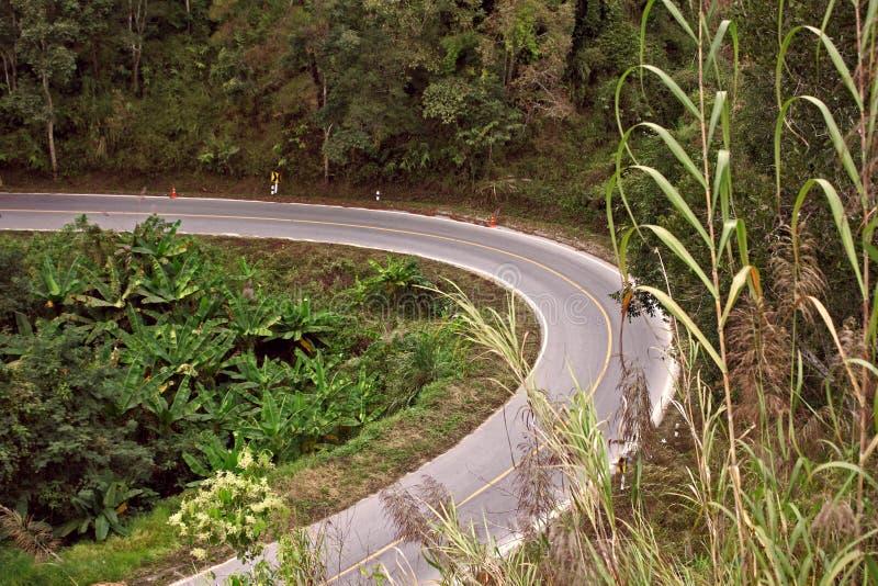 Ландшафт леса поворота налево асфальта пути дороги стоковые фото