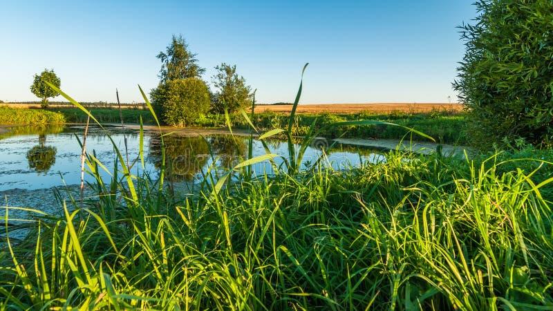 Ландшафт ЛЕТА Взгляд от побережья через тростники к малому болотистому озеру в середине аграрного поля стоковая фотография