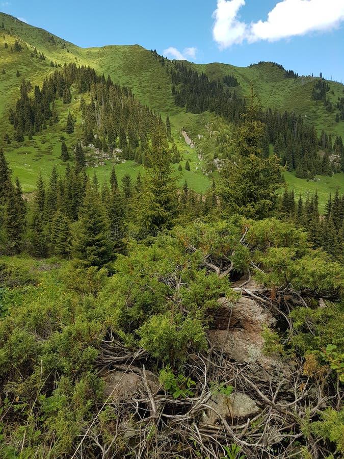 Ландшафт лета в горах стоковое изображение rf