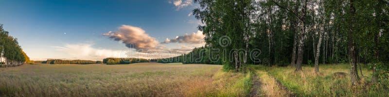 Ландшафт лета в сельской местности граница между аграрными полем и лесом стоковые фото
