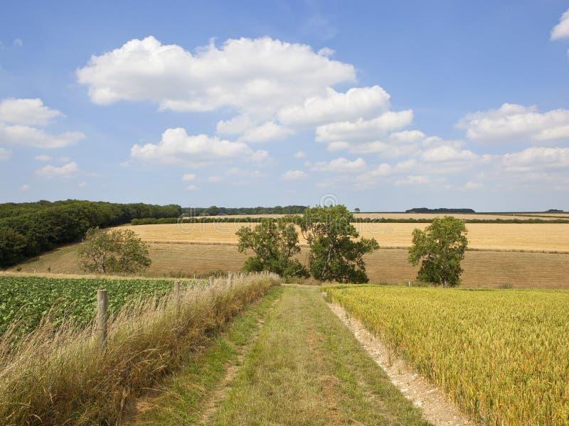 Ландшафт лета заплатки с деревьями золы и травянистым следом стоковая фотография