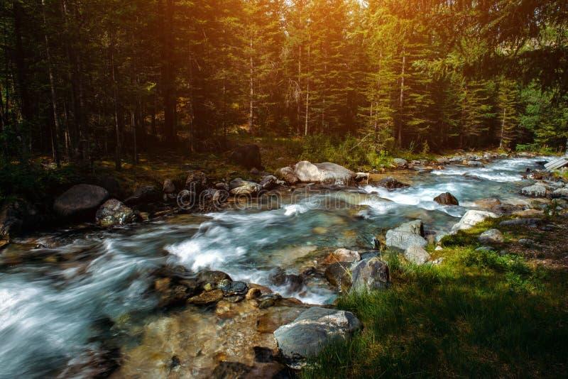 Ландшафт лета реки горы среди зеленых деревьев Sunlit река в изображении леса горы красивой природы стоковые фотографии rf