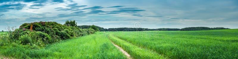 Ландшафт лета сельский панорамный взгляд зеленого аграрного поля с кустом вдоль грязной улицы стоковая фотография