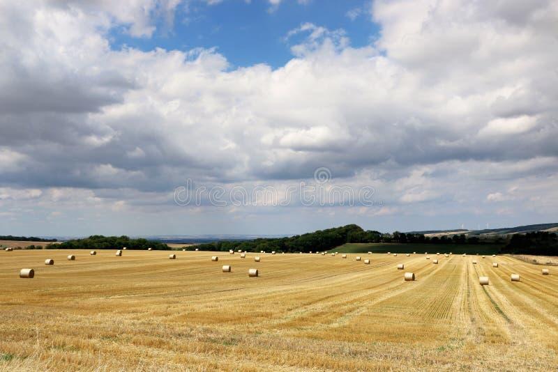 Ландшафт лета сельский со сбором поля, hayrolls, голубого неба, деревьев на горизонте Солнечное утро стоковые изображения rf