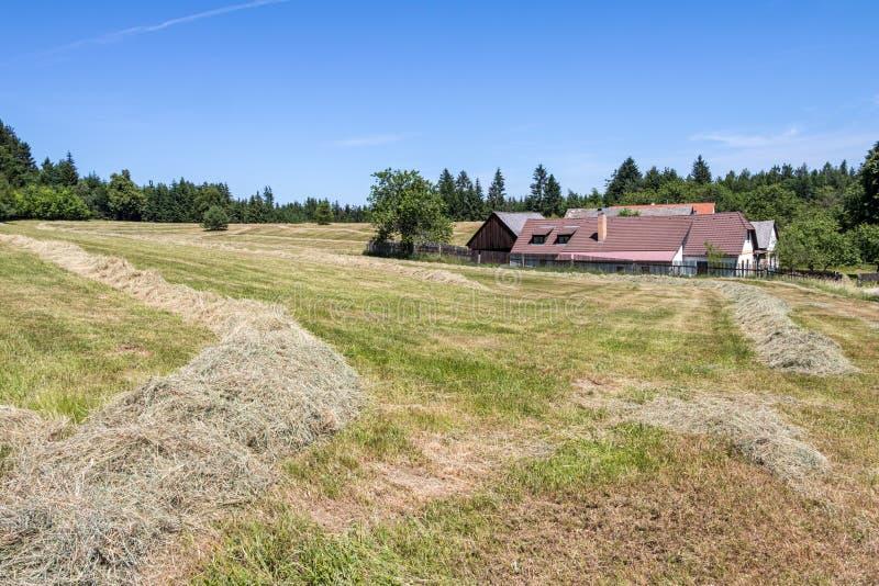 Ландшафт лета сельский с лугом, деревней и голубым небом стоковое фото rf