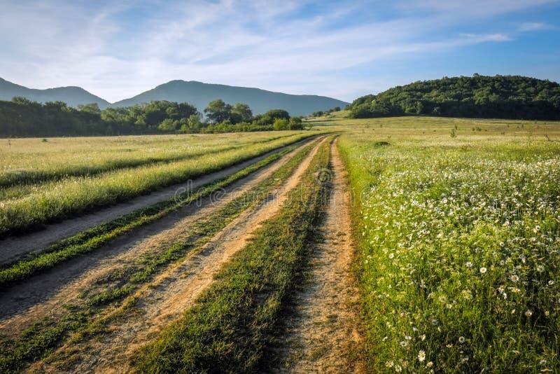 Ландшафт лета с зеленой травой, цветками, дорогой стоковая фотография rf