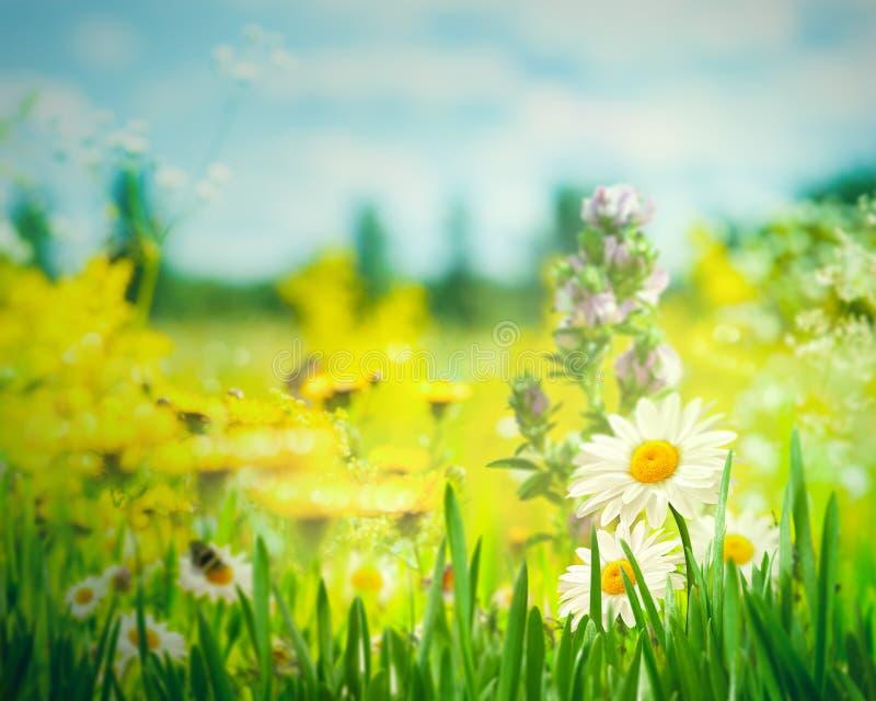 Ландшафт лета с полевыми цветками стоковая фотография rf