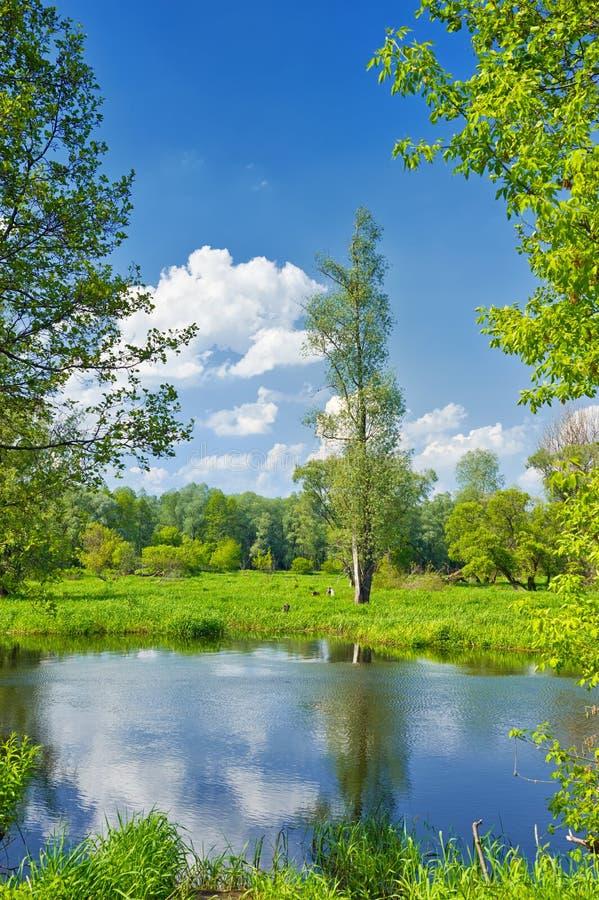 Ландшафт лета с сиротливым деревом и голубым небом стоковые изображения rf