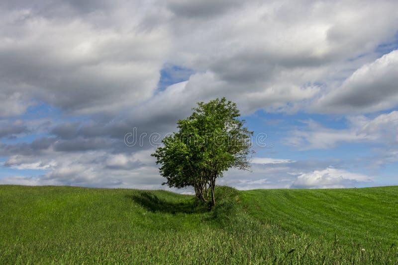Ландшафт лета с сиротливым деревом стоковое фото rf