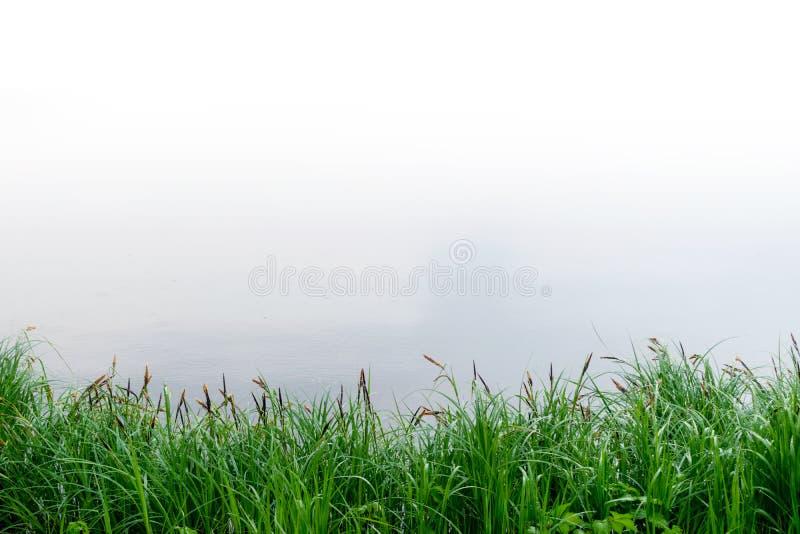 Ландшафт лета с тростниками и предпосылкой болота стоковые изображения rf