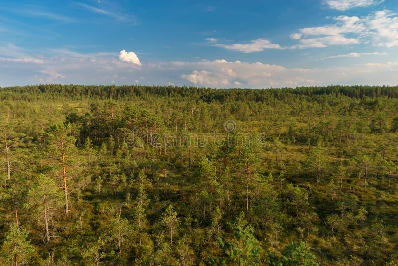 Ландшафт лета трясины Viru, национальный парк Lahemaa стоковое изображение