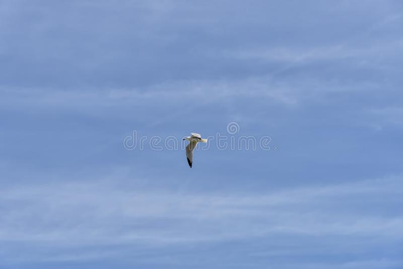 Ландшафт летнего дня парящей чайки в ярком голубом небе Ослабьте внутреннее фото стоковые изображения rf