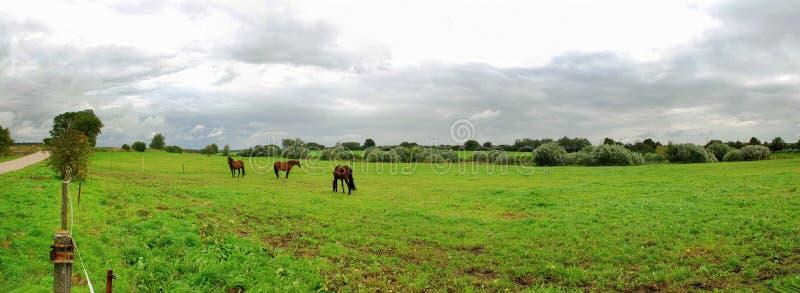 ландшафт лошадей стоковые фотографии rf