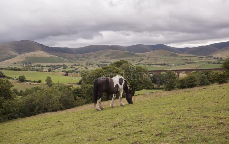 Ландшафт лошади тележки стоковая фотография