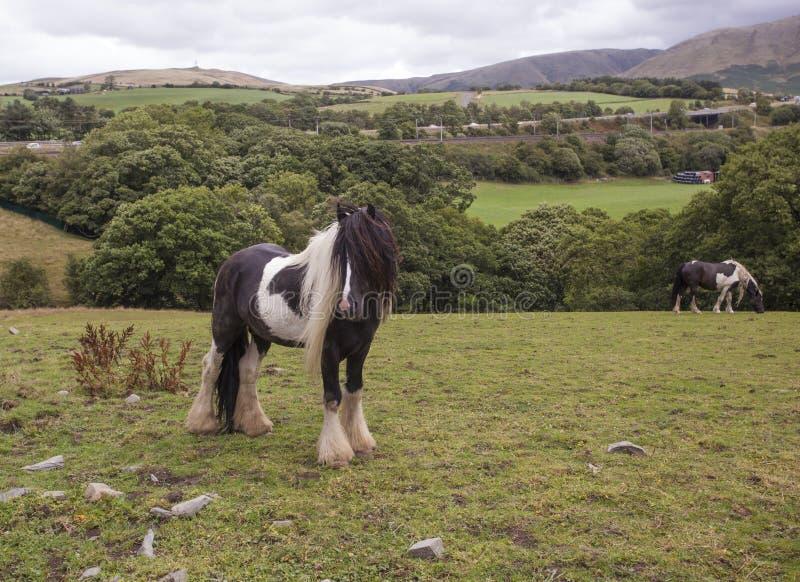 Ландшафт лошади тележки стоковое фото